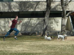 holden chasing the dogs