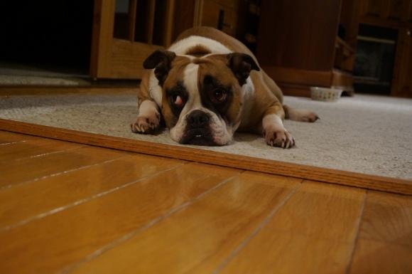 sad_puppy